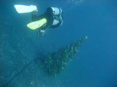 https://flic.kr/p/7ouFC5 | Underwater Christmas tree