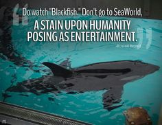 Shut down SeaWorld and all entertainment parks like this for good!!!