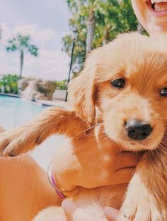 Super Cute Puppies, Baby Animals Super Cute, Cute Baby Dogs, Cute Little Puppies, Cute Dogs And Puppies, Cute Little Animals, Cute Funny Animals, Doggies, Cute Animal Photos