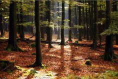 'Herbstzeit im Arnsberger Wald' by Peter Horner.