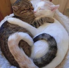 Cute Baby Cats, Cute Little Animals, Cute Funny Animals, Cute Babies, Funny Cats, Adorable Puppies, Cat Aesthetic, Cute Animal Photos, Cute Creatures