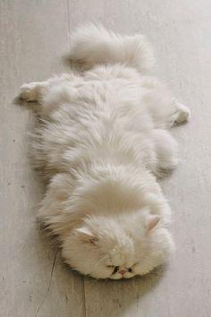 On dirait un tapis