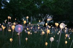 Field of Light by Bruce Munro.  Photo by Mark Pickthall