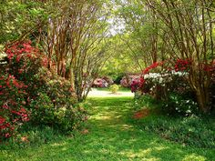 You are invited to step into Virginia's secret garden at Chippokes Plantation State Park, Va