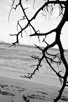 "Photo ""SpookyOldTree"" by tmcquain23"