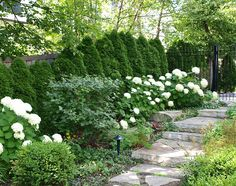 Green & White Garden: White Hydrangeas & A White Stone Path Stand Out Against The Greenery in the Background.