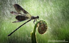 Початок літа принесе поступове припинення опадів — синоптик http://ukrainianwall.com/blogosfera/pochatok-lita-prinese-postupove-pripinennya-opadiv-sinoptik/  Весна завершується. Поплаче трохи на прощання) Тому 31 травня у нас пройдуть дощі. Дощі будуть скрізь, місцями сильні зливи, грози, град, при грозах шквали. Уважно видивляйтеся, чи не видно ще