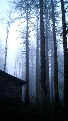 .: Caminando al Nevado de Colima ...