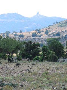 Het ongerepte binnenland bij Arzana. Je komt er loslopend vee en varkens tegen. Oosten van Sardinië