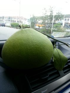 My newest car deodorizer...Ipoh's most famous pomelo..