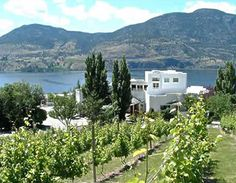 Penticton, BC in the Okanagan Wine Country. One of the most beautiful places I've been. Awesome for hiking, parasailing, hockey camp for kids and vineyard tours for adults. Sonora Desert, Beautiful Places, Beautiful Pictures, Sleeping Under The Stars, Parasailing, Mediterranean Style, Vacation Places, Wine Country, Bed And Breakfast