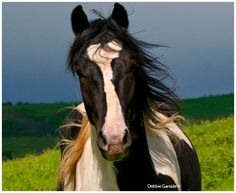 The Canadian Nature Photographer - Horse Photography by Debbie Garside