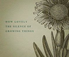 garden quotes How lovely the silence of growing things. Haiku, Cactus Mexico, Citation Nature, Plants Quotes, Quotes About Plants, Quotes About Flowers, No Rain, Garden Quotes, Garden Signs