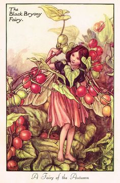 "Cicely Barker's Fairy Print - ""THE BLACK BRYONY FAIRY"" - LARGE Children's Lithogrpah - c1955"