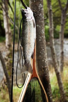 Trout #fishing