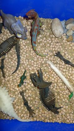 Dinosaur Sensory Bin...dried lentils, dried garbanzo beans, rocks, triceratops bones, a stick, a squishy glow in the dark dino, a bug-eyed dino, and some plastic dinosaurs - The Chaos and the Clutter ≈≈