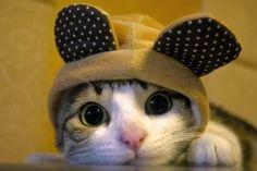Mais Gifs Animados de Gatos