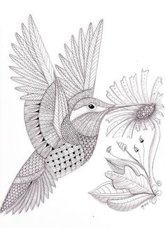 Choose your favorite zentangle drawings from millions of available designs. All zentangle drawings ship within 48 hours and include a money-back guarantee. Zentangle Drawings, Bird Drawings, Zentangle Patterns, Zentangles, Bird Coloring Pages, Adult Coloring Pages, Coloring Books, Colouring, Hummingbird Drawing