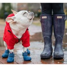 Comfortable rubber dog boots that are easy to put on - and stay on - making for the perfect paw protection. Made from natural vulcanized rubber, eco-friendly.