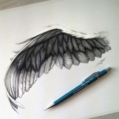 Image result for study of wings