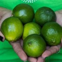 Para profissional, o limão é o melhor aliado na busca de bem-estar físico, melhora nas funções do organismo e consequente maior energia no dia a dia.