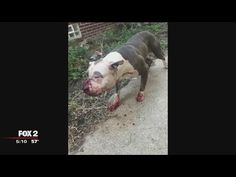 Heroic Woman Saves a Pit Bull Being Mercilessly Beaten on the Street