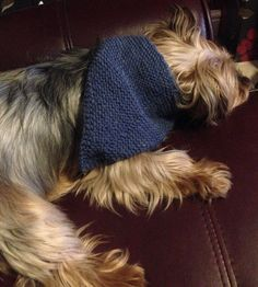 Check out this item in my Etsy shop https://www.etsy.com/uk/listing/289915249/dark-blue-dog-bandana