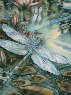 colorful pictures of dragon flies | Painting Dragonflies And The Color Turquoise | Art With Heart: Drawing ...