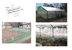 A soda bottle greenhouse