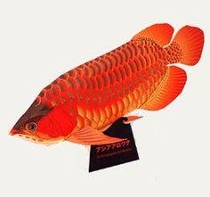 CASITA DE PAPEL: Dollhouse paper: Fish Papercraft by Epson