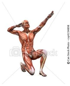 Stock Illustration - posing muscles - stock illustration, royalty free illustrations, stock clip art icon, stock clipart icons, logo, line art, pictures, graphic, graphics, drawing, drawings, artwork