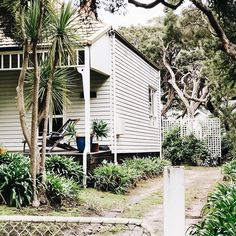 Beach house love along the tea trees at Point Lonsdale. I want a little seaside cottage! What kind of beach house do you love? Tea Tree, Seaside, Beach House, Trees, Cottage, Inspiration, Seaside Cottages, Beach Homes, Biblical Inspiration
