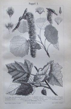 PAPPEL I. II. 1896 Original Alter Druck Antique Print Lithographie