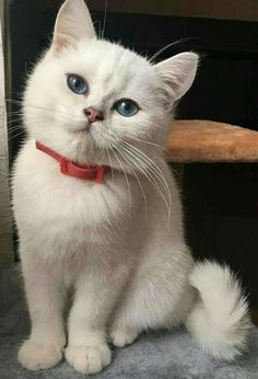 Image in Cats collection by Easygoingfuture on We Heart It Cute Cats And Kittens, Cool Cats, Kittens Cutest, Pretty Cats, Beautiful Cats, Gatos Cool, Ugly Cat, Cute Cats Photos, Pet Photos