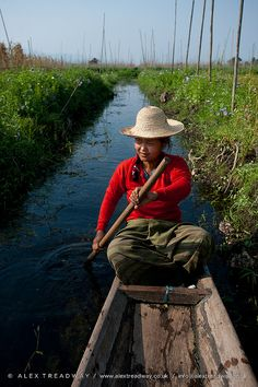 Floating gardens . Myanmar