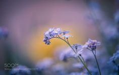 Feeling blue by ErikNorelv. @go4fotos