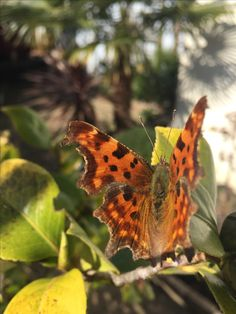Beautiful butterfly spotted! Spring time 🌸
