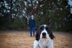 nice portrait of dog with owner