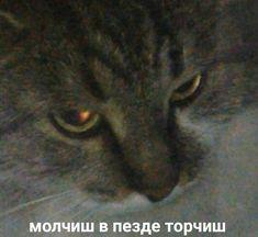 Memes Funny Faces, Cartoon Memes, Stupid Memes, Cat Memes, Dankest Memes, Word Cat, Hello Memes, Funny Note, Russian Memes
