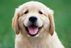 New research shows many people consider man's best friend to be more intelligent than human children.