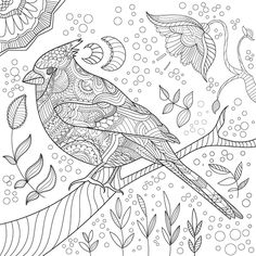 Color book for adult Coloring Pages For Grown Ups, Bird Coloring Pages, Adult Coloring Book Pages, Printable Adult Coloring Pages, Colouring Pics, Coloring Books, Alphabet Coloring, Bird Art, Pet Birds