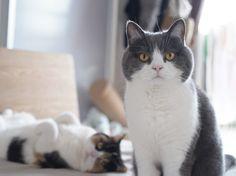 aawww...cute cats