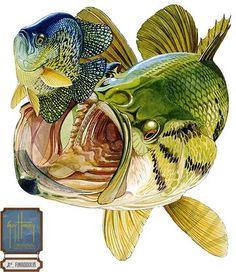 Bass and Bluegill - Guy Harvey Bluegill are typical forage food for hungry Largemouth Bass.  Guy Harvey's Largemouth and Bluegill captures the moment of impact of a Bass inhaling a Bluegill.: