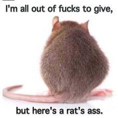 Giving a rat's ass...