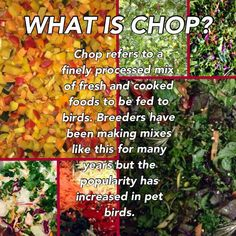 Check it out! Here are some Chop recipes for your Fids ... low energy and super healthy.