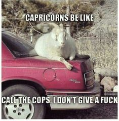 Capricorns be like... I know the rules inside and out. Let's play.
