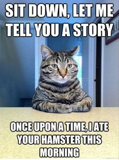 Top 35 most funniest cat quotes - Funny Cat Quotes #funnycat #catquotes #cats