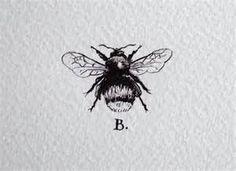 Bee Scientific Drawing