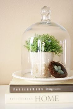 Do a table in natural and found things under glass - birds nests, moss, eggs, single blossom, etc.