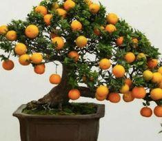 Evinizde Bonsai (Minyatür Ağaç) Yetiştirebilirsiniz Plants, Plant, Planting, Planets